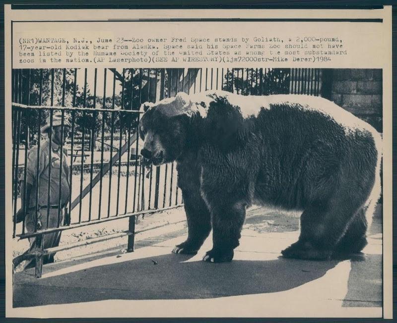 Urso pardo vs Urso polar - Página 2 Goliath