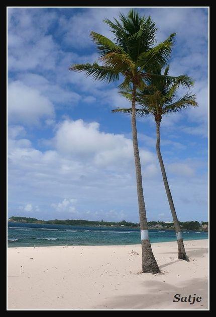 Les Belles Plages de Guadeloupe (LUMIX FZ50) Guadeloupe%202008%20-%20071
