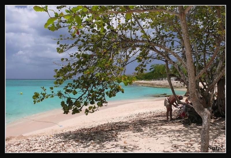 Les Belles Plages de Guadeloupe (LUMIX FZ50) Guadeloupe%202008%20-%20442