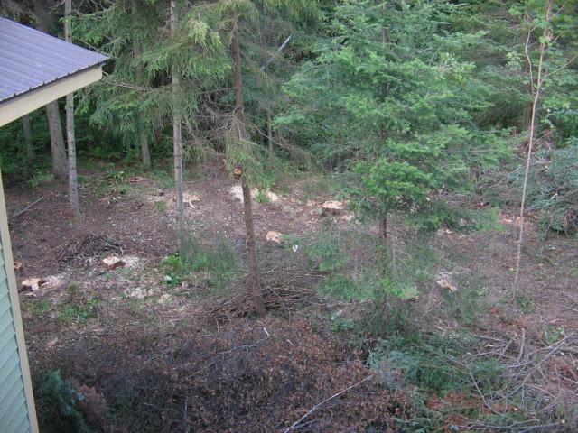 aménagement du boisé arrière Phlox%2009%20005