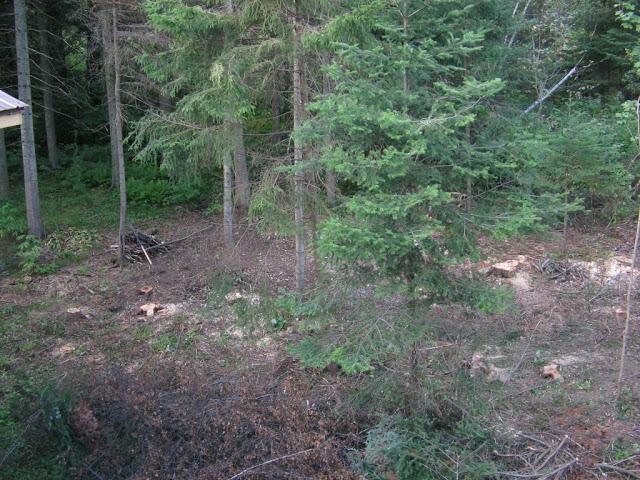 aménagement du boisé arrière Phlox%2009%20007
