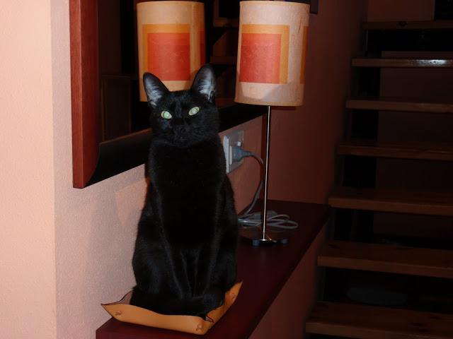 Camas de gato disponibles P1110008