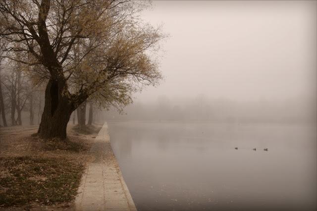 Kroz maglu...  IMG_4183-300