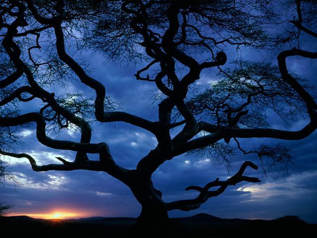 Bilo jednom jedno drvo Serengeti%20National%20Park%2C%20Tanzania