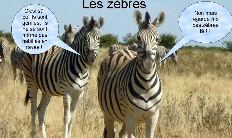 """Les """"Stupid Zèbres"""" c'est nous... - Page 6 Zebres"""