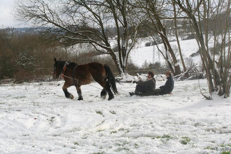 Le  calvados sous la neige... les chevaux s'éclatent! IMG_5297