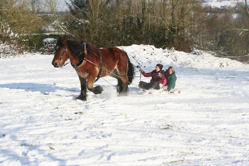 Le  calvados sous la neige... les chevaux s'éclatent! IMG_5234