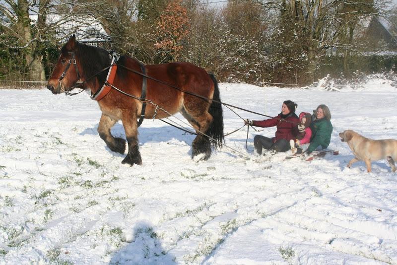 Le  calvados sous la neige... les chevaux s'éclatent! IMG_5235