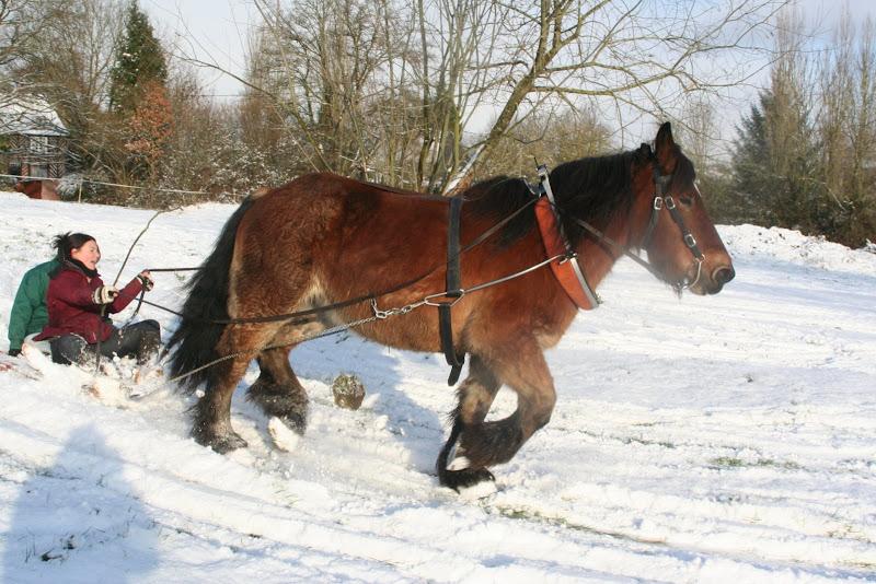 Le  calvados sous la neige... les chevaux s'éclatent! IMG_5228