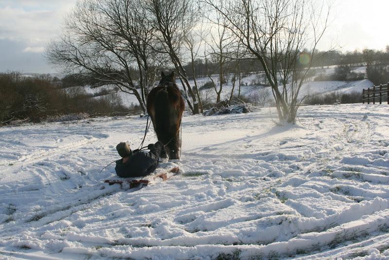 Le  calvados sous la neige... les chevaux s'éclatent! IMG_5215