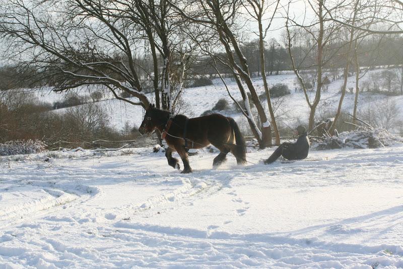 Le  calvados sous la neige... les chevaux s'éclatent! IMG_5209