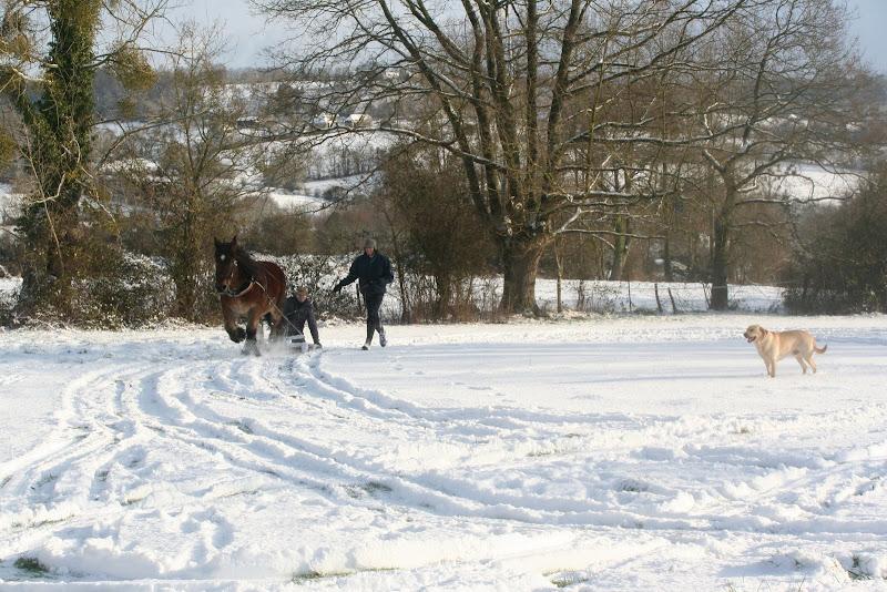 Le  calvados sous la neige... les chevaux s'éclatent! IMG_5191