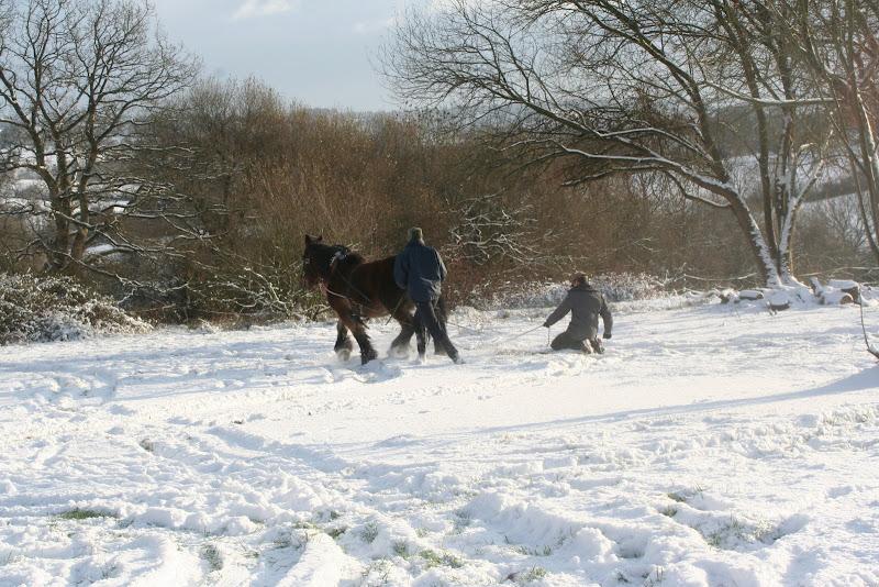 Le  calvados sous la neige... les chevaux s'éclatent! IMG_5187