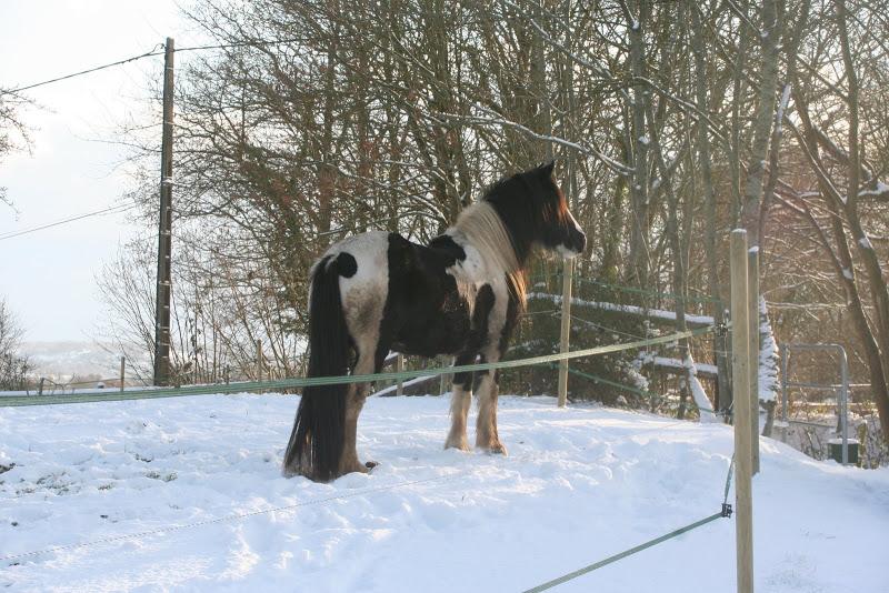 Le  calvados sous la neige... les chevaux s'éclatent! IMG_5171
