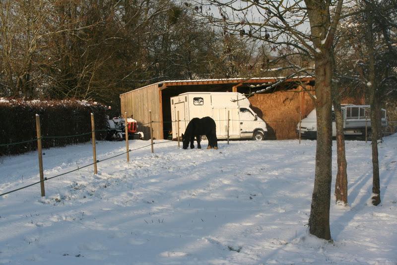 Le  calvados sous la neige... les chevaux s'éclatent! IMG_5176
