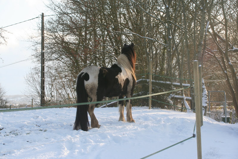 Le  calvados sous la neige... les chevaux s'éclatent! IMG_5174