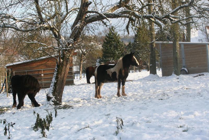Le  calvados sous la neige... les chevaux s'éclatent! IMG_5156