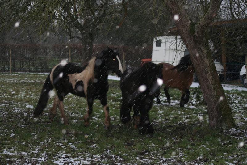 Le  calvados sous la neige... les chevaux s'éclatent! IMG_5017