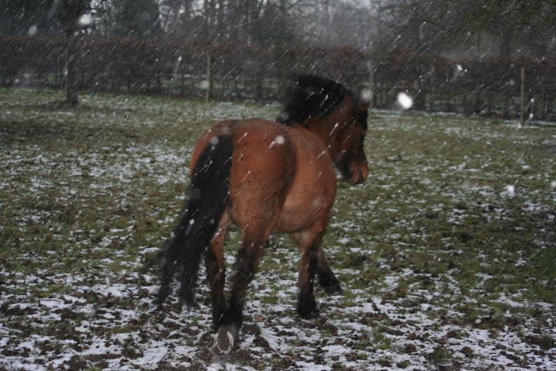 Le  calvados sous la neige... les chevaux s'éclatent! IMG_5016