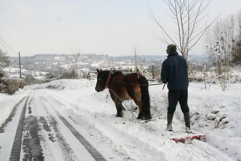 Le  calvados sous la neige... les chevaux s'éclatent! IMG_5124