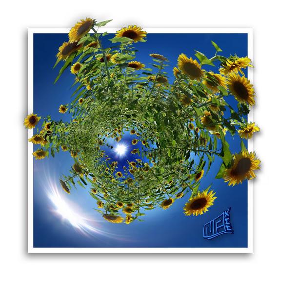VOTEZ- Votre plus belle photo au salon de la Photo - PHASE 2 PGjosiane20100815infinitudeSOLAIRESmultiFLEURSsdcCOS4000px