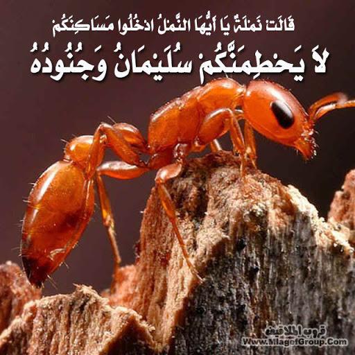 عجاءب الارض سبحان الله       نصيحه ادخل وشوف ATT591789