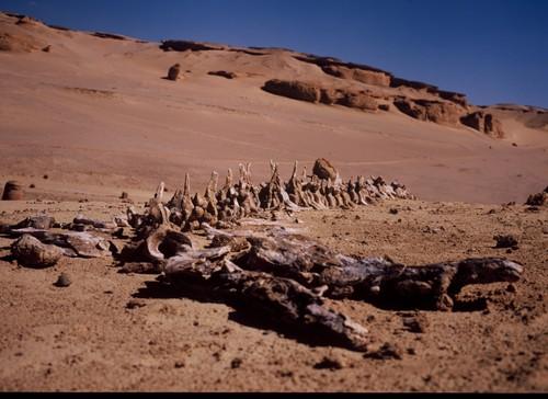 Valle  de las ballenas -Wadi Al-Hitan Patrimonio-2