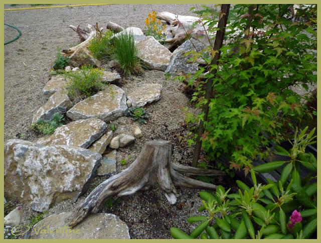 Jardin alpin MiniRocailleJardinAlpin10%2006%2003_87RM
