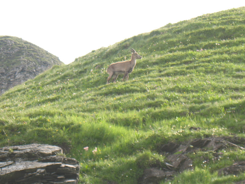 [Alpes 07-2010] quelques photos IMG_4411