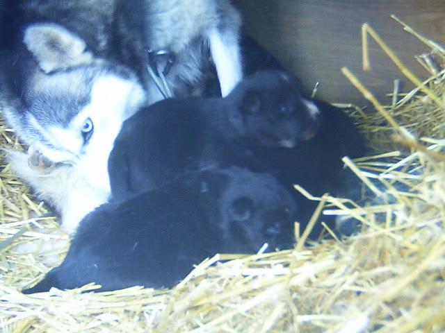 Nos loups grandissent, postez nous vos photos - Page 5 PICT0170