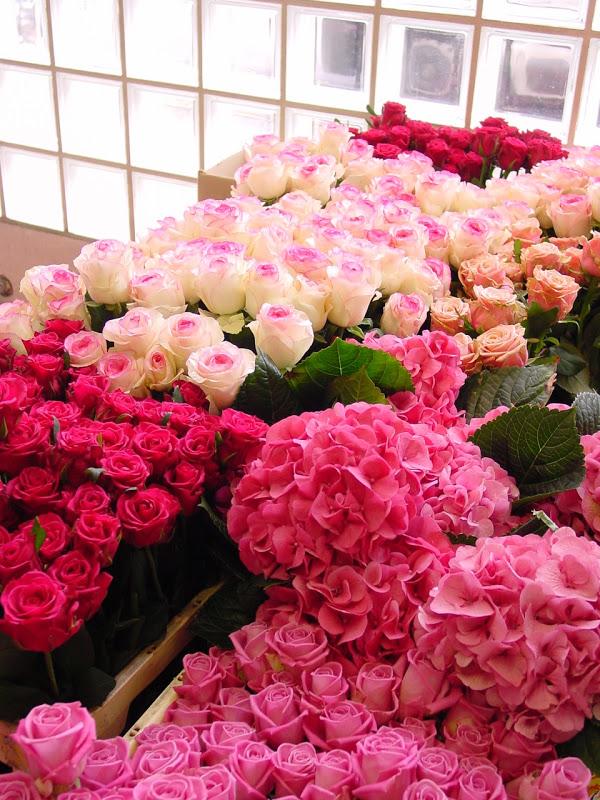 Lule dhe vetëm lule! 36