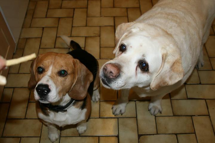 Recettes de friandises et petits gateaux pour chiens IMG_5158