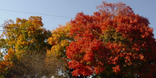 Colors & Reflections MISCcolor5_NeslerRd