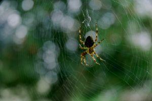 ملابس من خيوط العنكبوت!!!!! Spider_web
