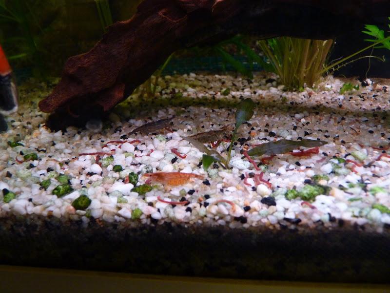 Ma petit histoire Aquariophile de 2009 à aujourd'hui  Aquarium%20300110%20017