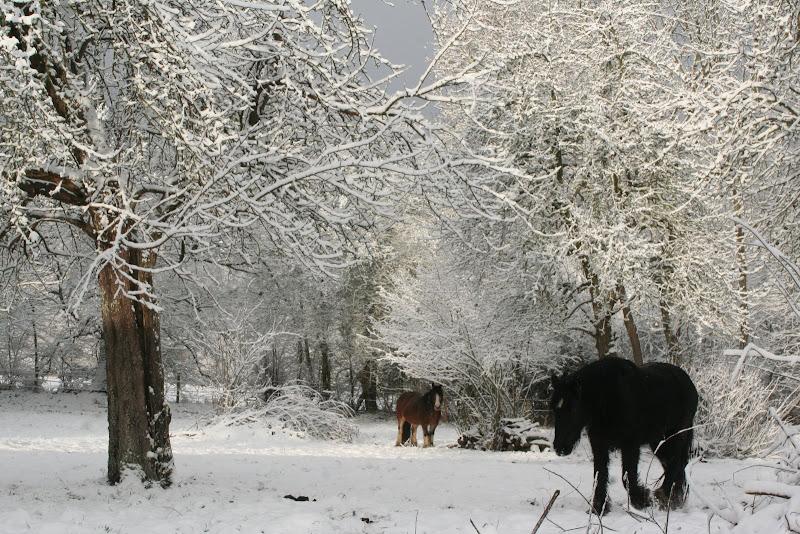 Le  calvados sous la neige... les chevaux s'éclatent! IMG_5537