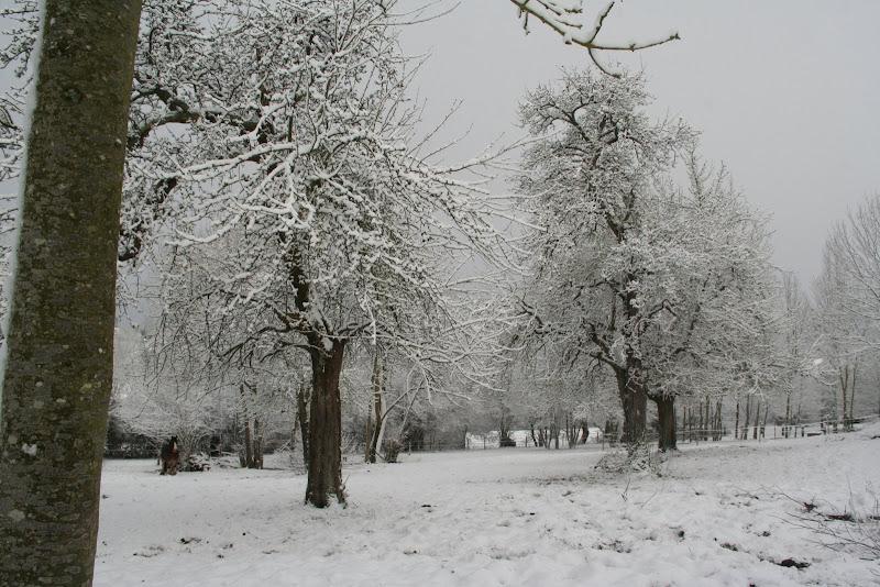 Le  calvados sous la neige... les chevaux s'éclatent! IMG_5546