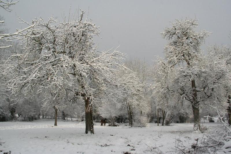 Le  calvados sous la neige... les chevaux s'éclatent! IMG_5544