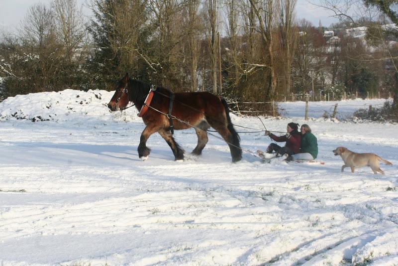 Le  calvados sous la neige... les chevaux s'éclatent! IMG_5224
