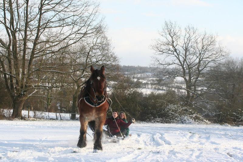 Le  calvados sous la neige... les chevaux s'éclatent! IMG_5219