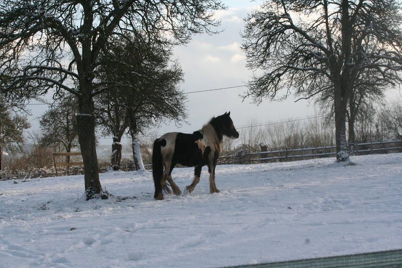 Le  calvados sous la neige... les chevaux s'éclatent! IMG_5165