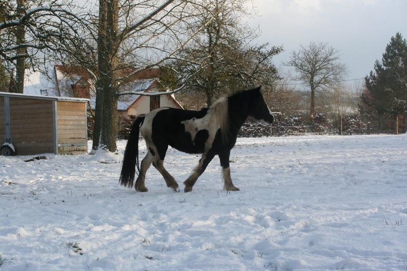 Le  calvados sous la neige... les chevaux s'éclatent! IMG_5162