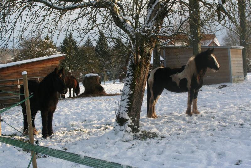 Le  calvados sous la neige... les chevaux s'éclatent! IMG_5152
