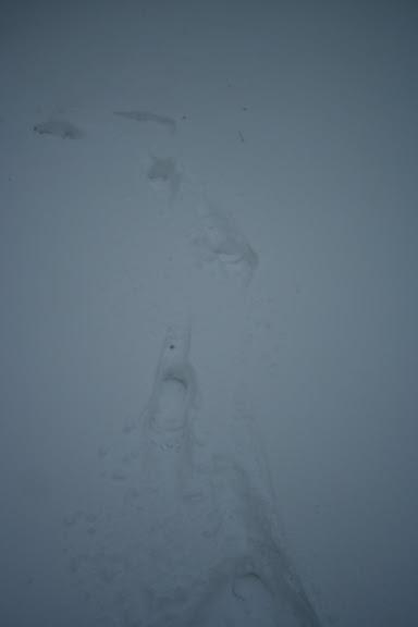 Le  calvados sous la neige... les chevaux s'éclatent! IMG_5070