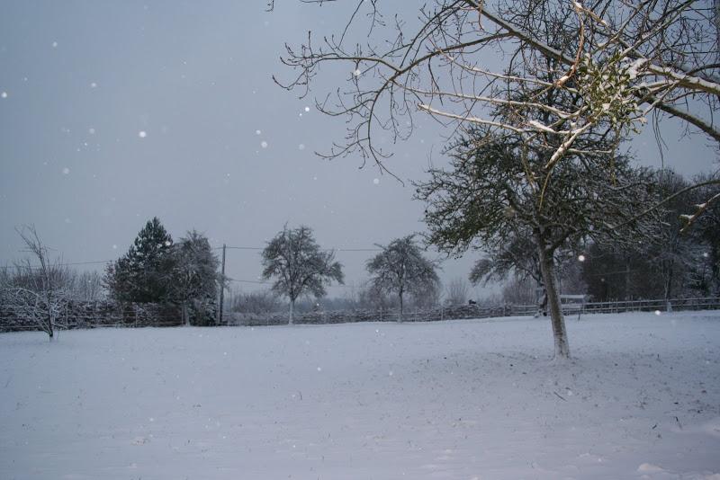 Le  calvados sous la neige... les chevaux s'éclatent! IMG_5061