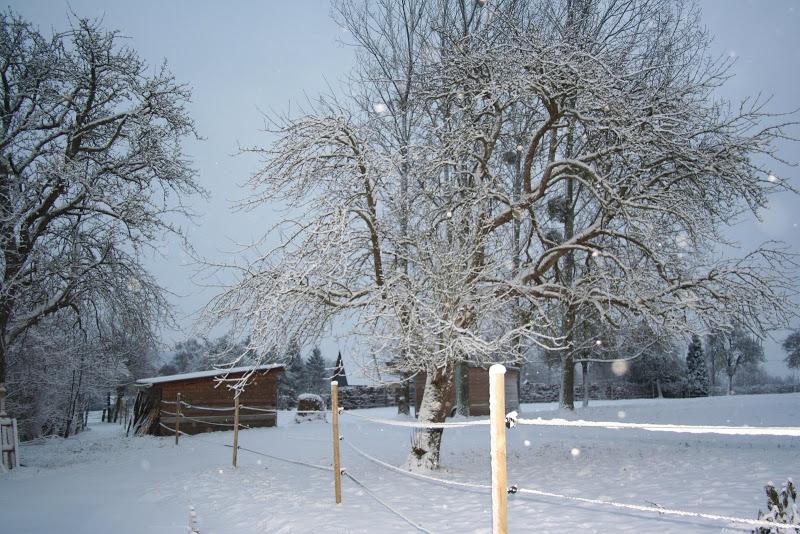 Le  calvados sous la neige... les chevaux s'éclatent! IMG_5051