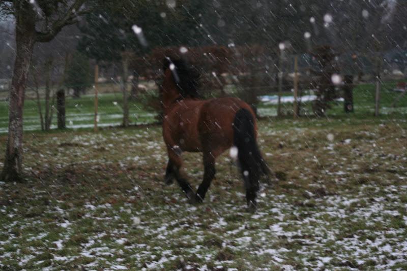 Le  calvados sous la neige... les chevaux s'éclatent! IMG_5014
