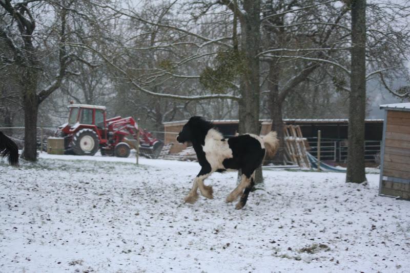 Le  calvados sous la neige... les chevaux s'éclatent! IMG_4965