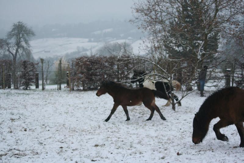 Le  calvados sous la neige... les chevaux s'éclatent! IMG_4963