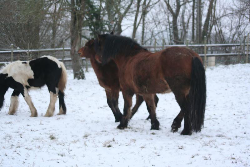 Le  calvados sous la neige... les chevaux s'éclatent! IMG_4959